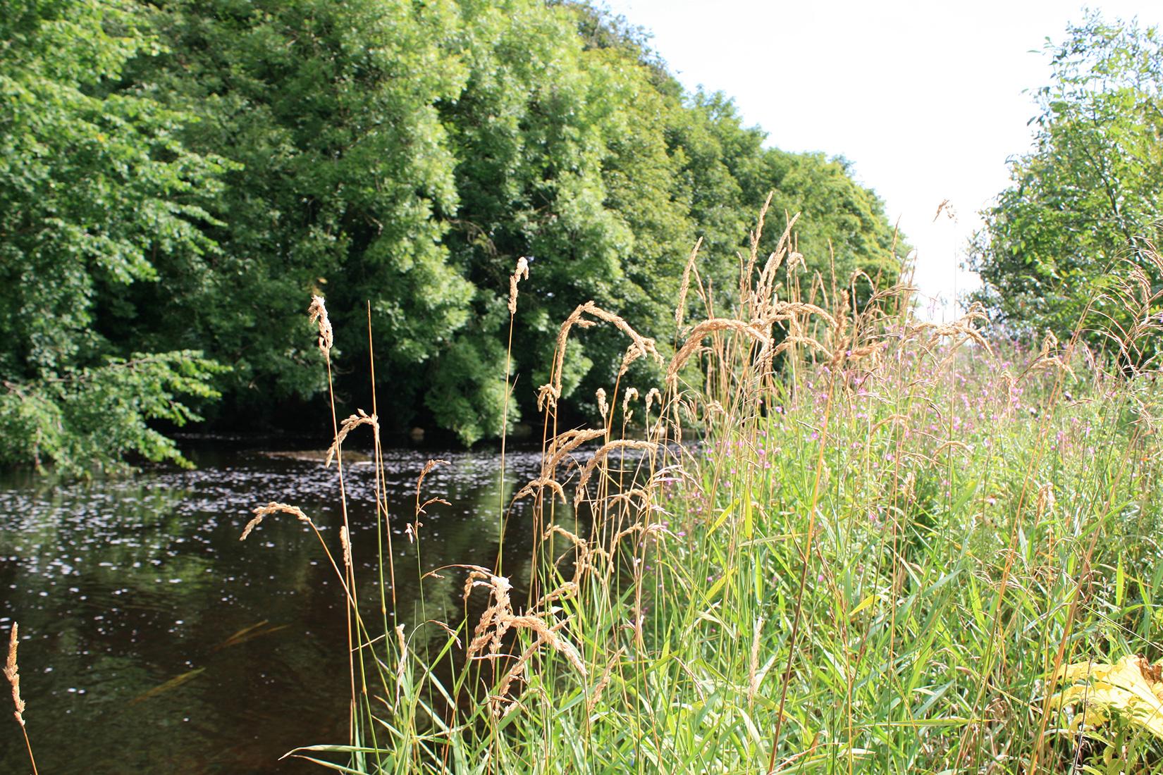 landscape-river-trees-grassland