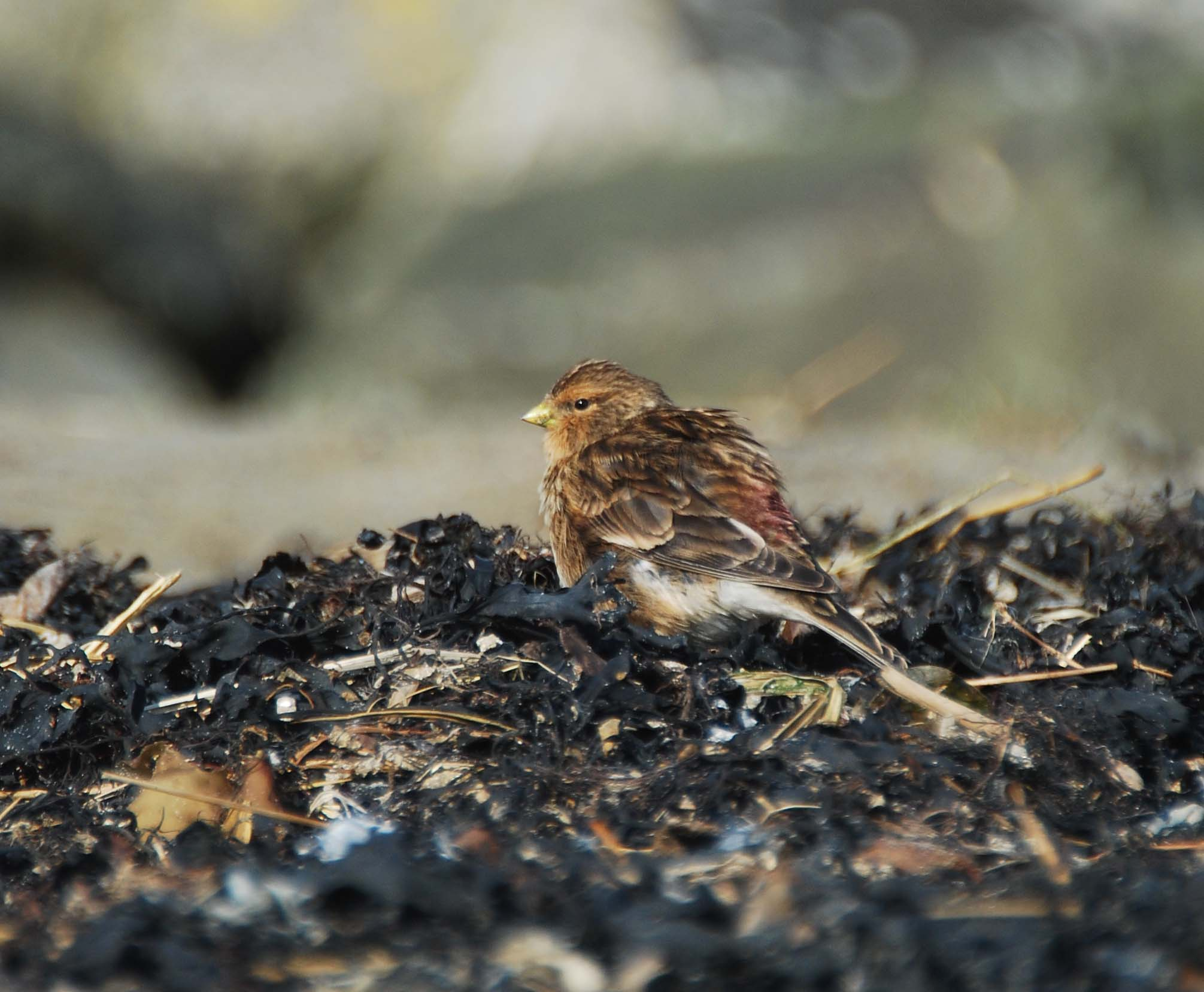 Farmland Bird Hotspot Mapping Project: Heritage Week Update