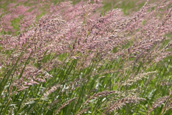 grasses-blowing-in-the-wind