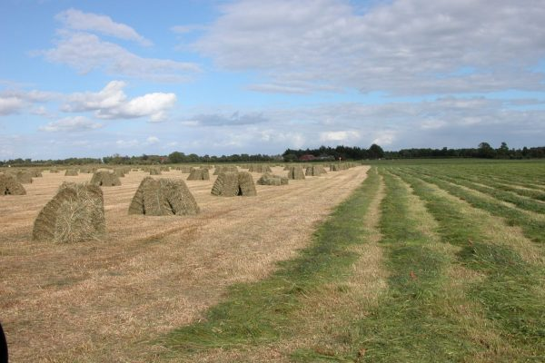 hay-meadow-after-cutting