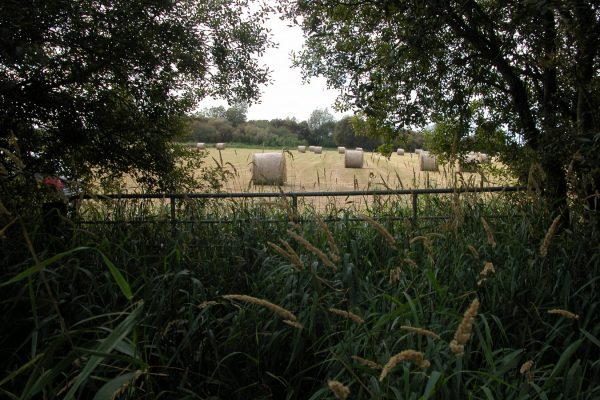 hay-meadows-after-cutting-visible-through-hedge