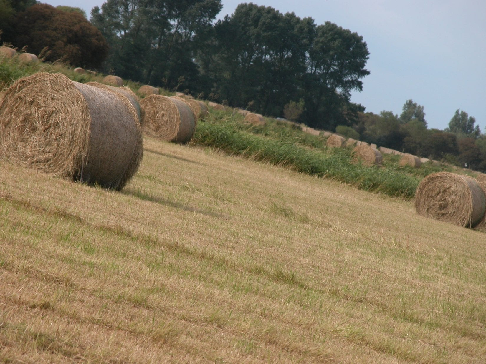 hay-meadow-after-cutting-with-round-bales