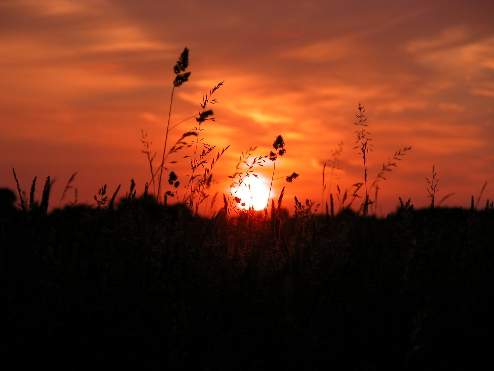 sunset-at-dusk-with-grasses-silhoutted-against-red-sky