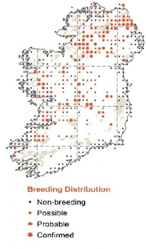 Map-Distribution-Summer-Curlew