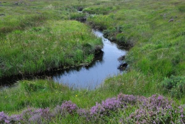 Bog-stream-on-pettigo-plateau