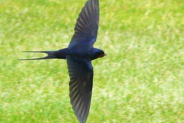 Swallow (ufopilot)