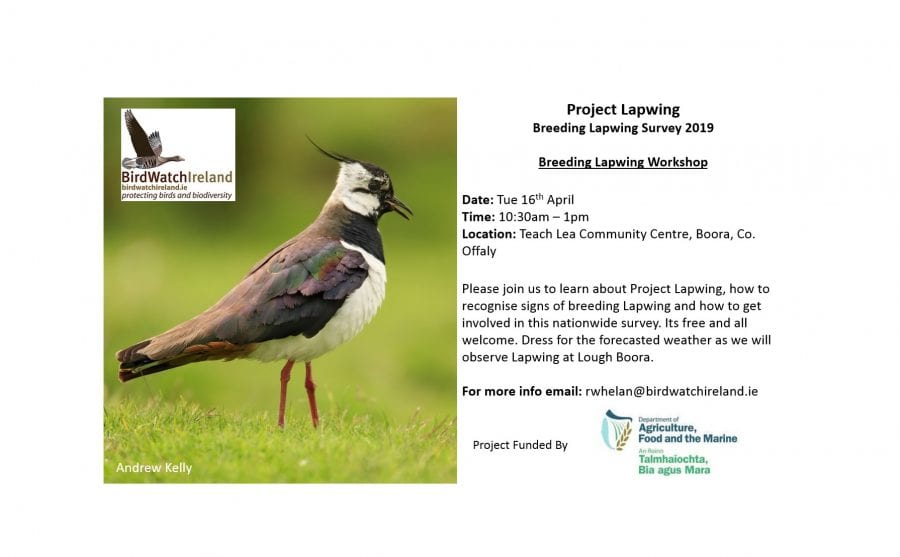 Event-Poster-Lapwing-Workshop