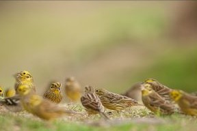 Yellowhammer-48-Edward-W-Delaney-300x200 (2)