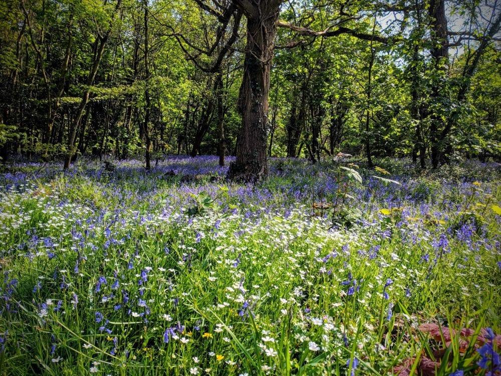 woodland-flowers-in-bloom