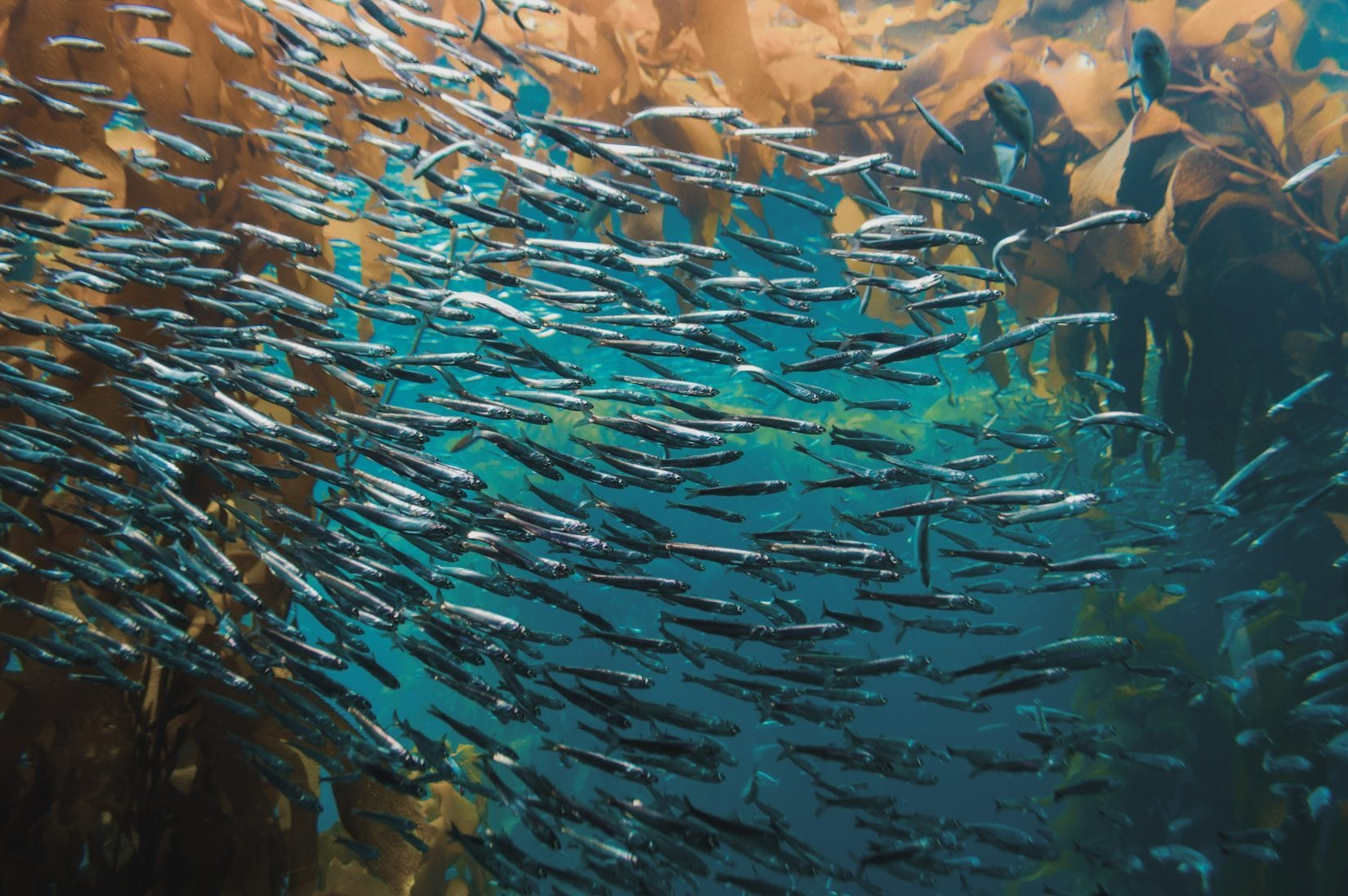 shoal of fish swimming