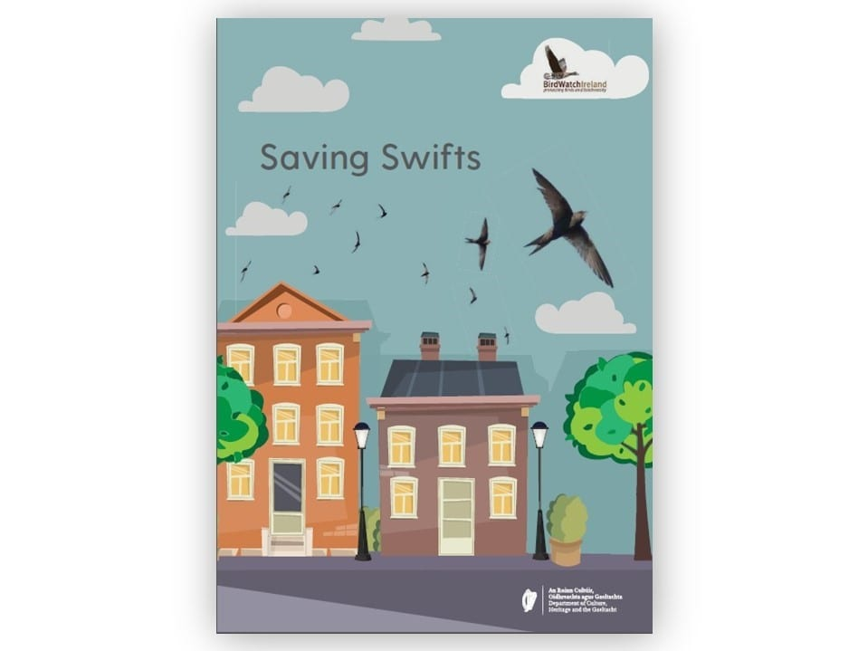 Blue-sky-swifts-flying-over-red-brick-houses