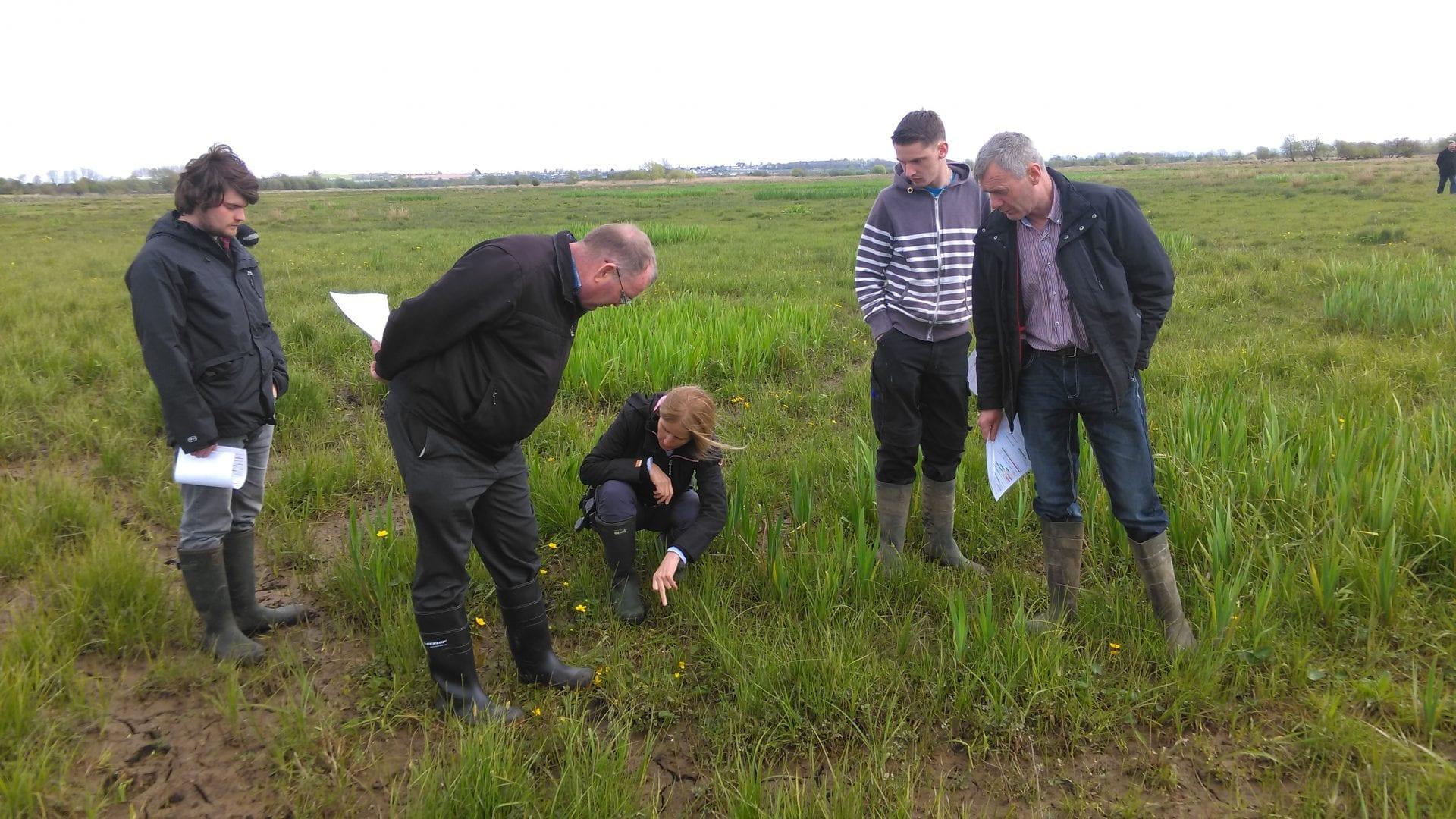 farmers-specialist advisory-breeding waders-Shannon Callows