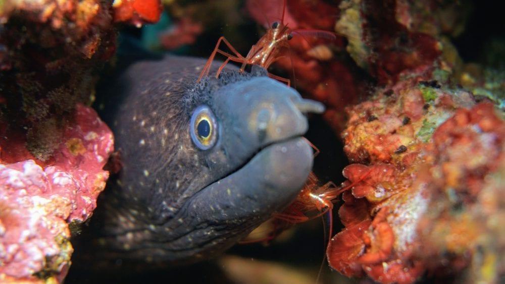moray-eel-head