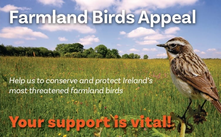 Save Ireland's Farm Birds: donate now