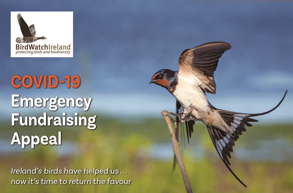 Ireland's birds need your help: please donate