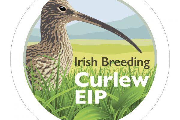 Curlew logo 6