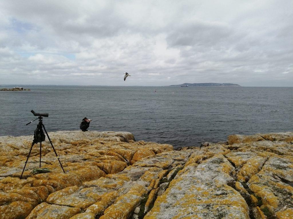 Ring-reading-Dalkey-Island