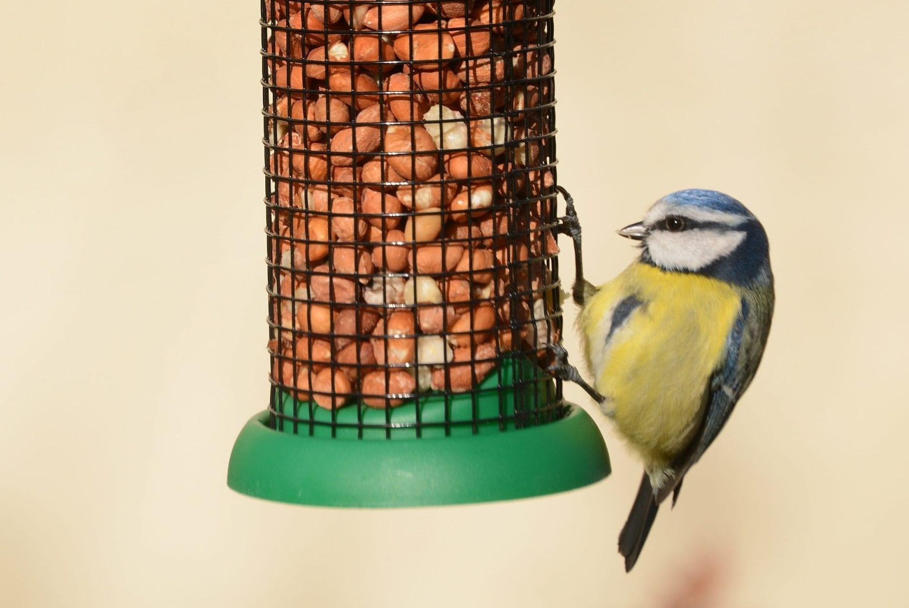 Home Page Birdwatch Ireland