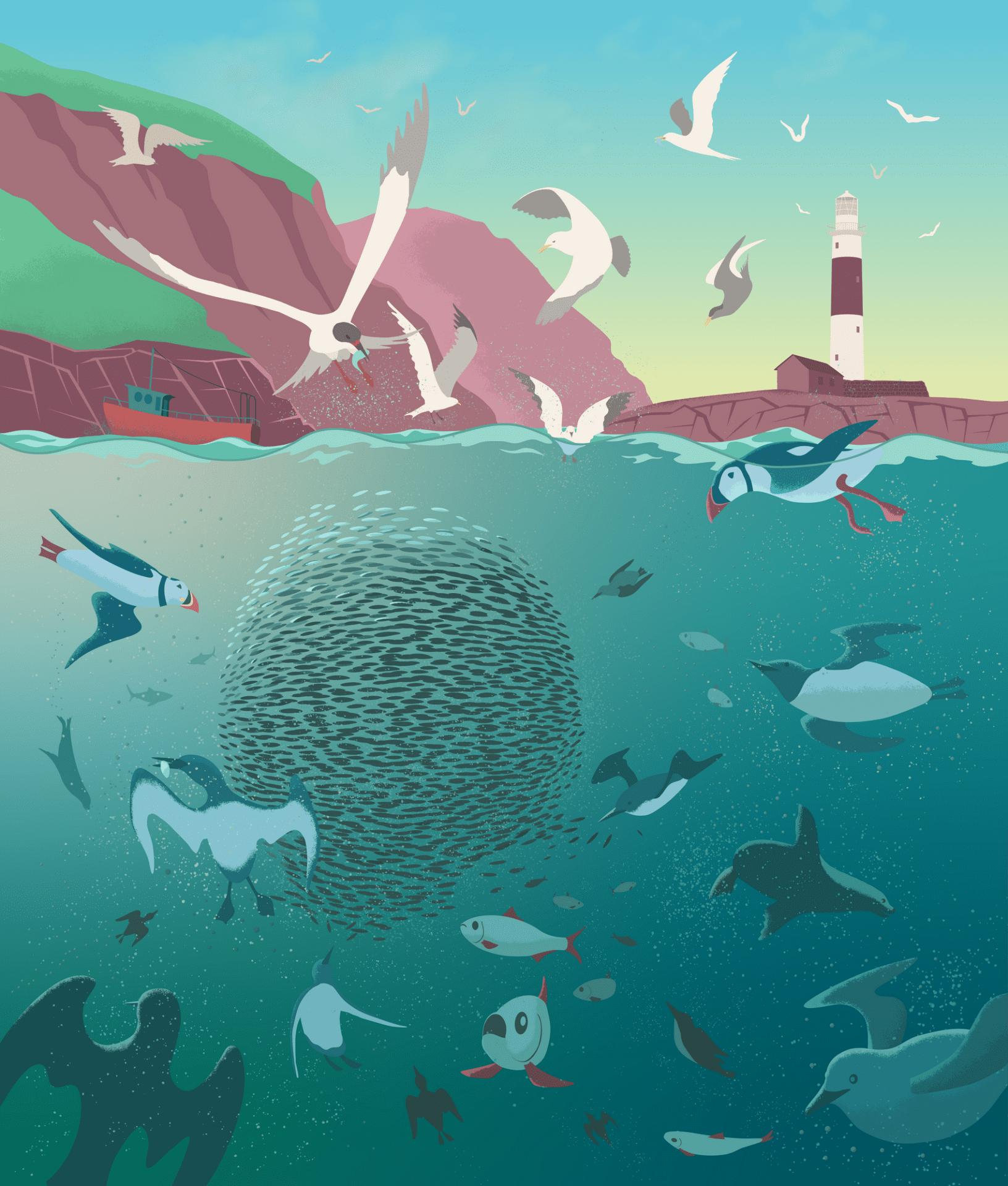 Fish-Herring and sea life off Rockabill-Jacek Matysiak