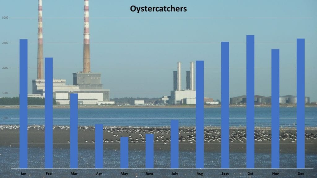Oystercatcher_Peak_Numbers_Month_DBBP